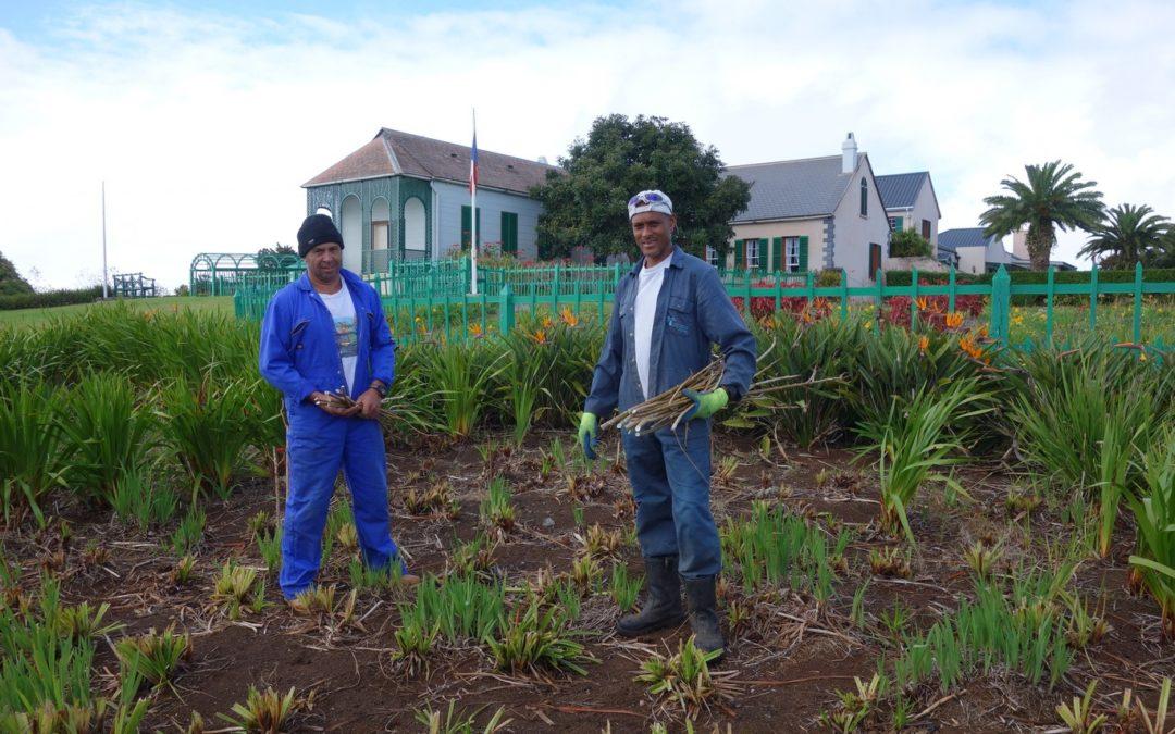 Photographie de George Thomas et Ralph Knipe, deux des jardiniers actuellement employés à Longwood.